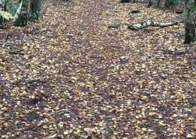 Autumn leaves pathway at Lords Hill - photograph by kind permission of Johanna Beilby