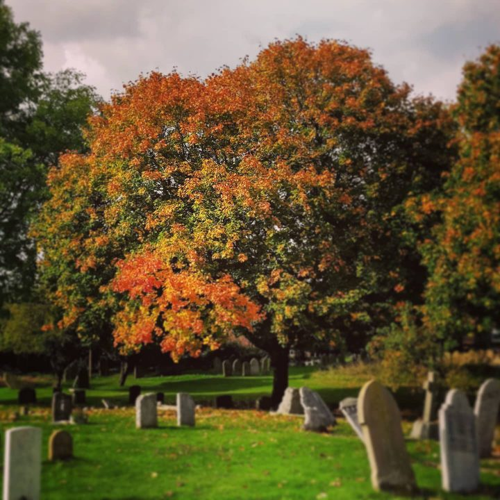 Autumn leaves on a tree at the cemetery.